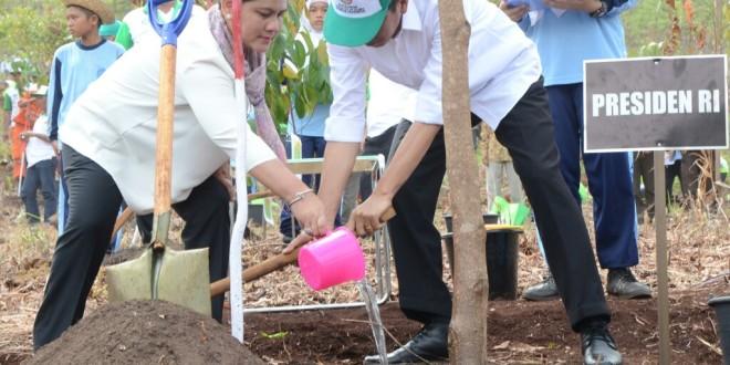 Presiden Joko Widodo dan Ibu Iriana menanam pohon di Taman Hutan Rakyat Sultan Adam, Mandiangin, Banjar, Kalimantan Selatan, Kamis (26/11)